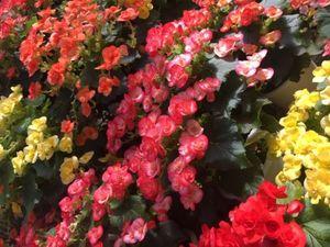 カラフルな花.jpeg